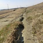 堤防の法尻に見られる砂の噴出